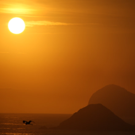 early morning golden flight, Canon EOS 1000D, Canon EF-S 55-250mm f/4-5.6 IS