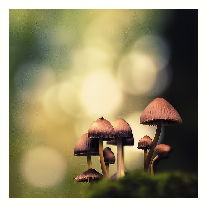 Photograph Little mushrooms by Stéphane ABCDEF on 500px