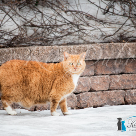 I find Garfield, Canon EOS 70D, Canon EF-S 55-250mm f/4-5.6 IS STM