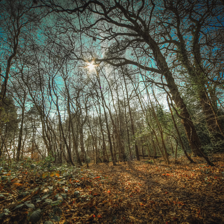 Canford Heath., Canon EOS 5D MARK II, Sigma 12-24mm f/4.5-5.6 EX DG ASPHERICAL HSM