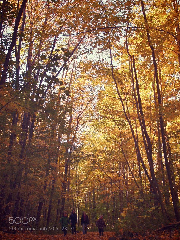 Photograph Autumn Promenade by Jp Zuferri on 500px