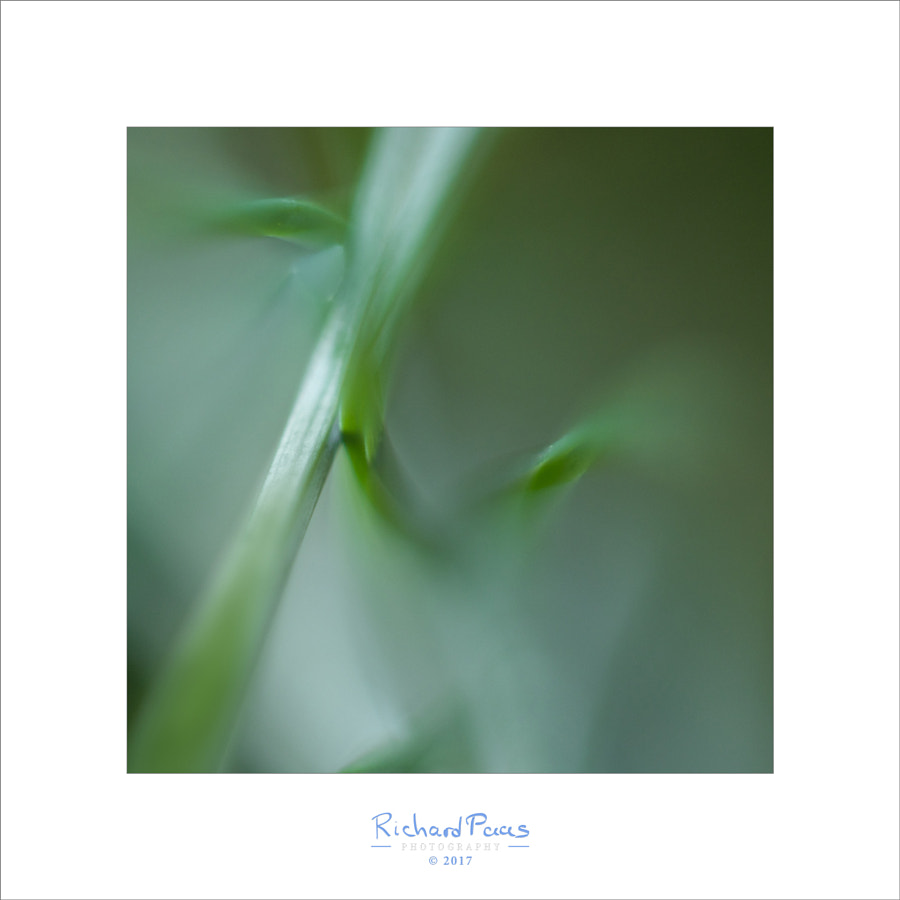 Green Grass #3 (Helios lens) by Richard Paas on 500px.com