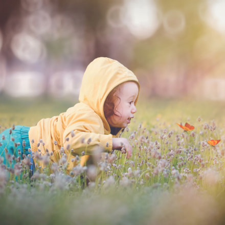 first steps, Canon EOS 650D, Canon EF 40mm f/2.8 STM