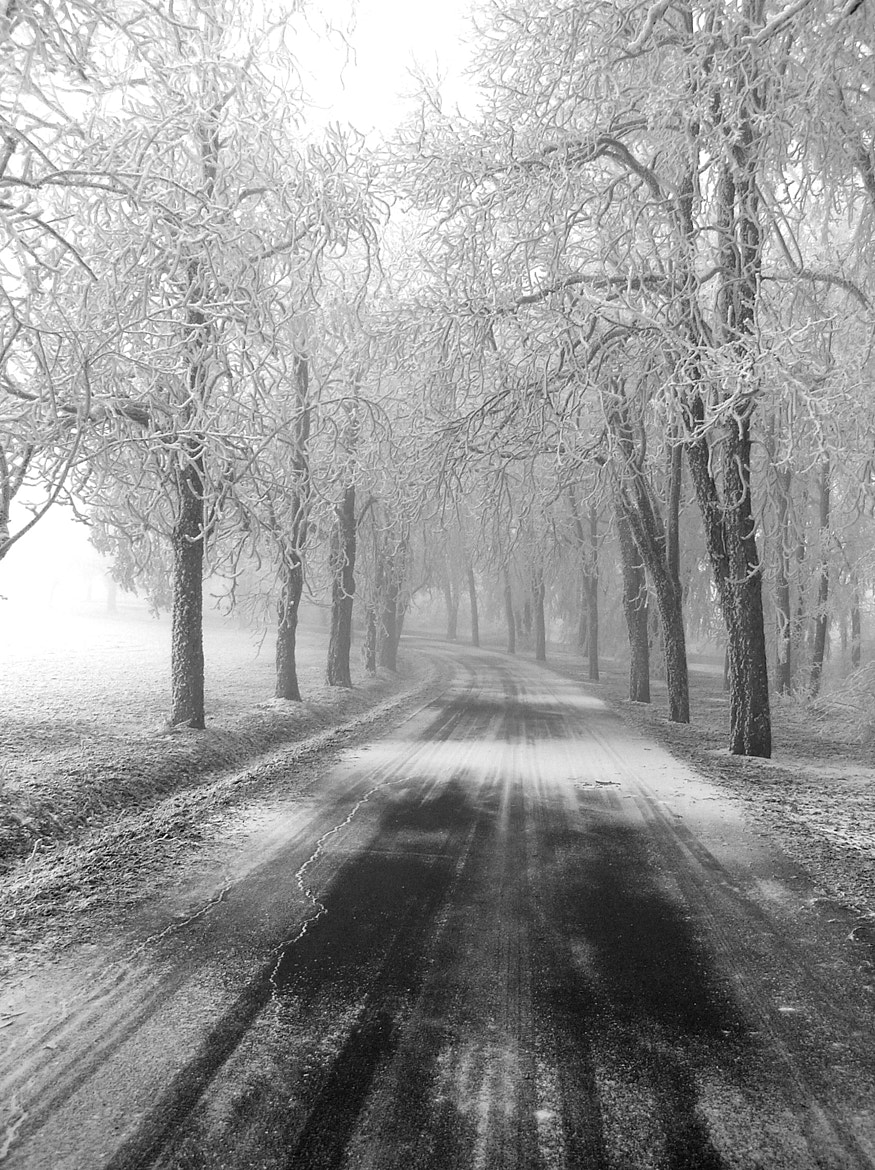 Photograph winter avenue by Marion Hartmann on 500px