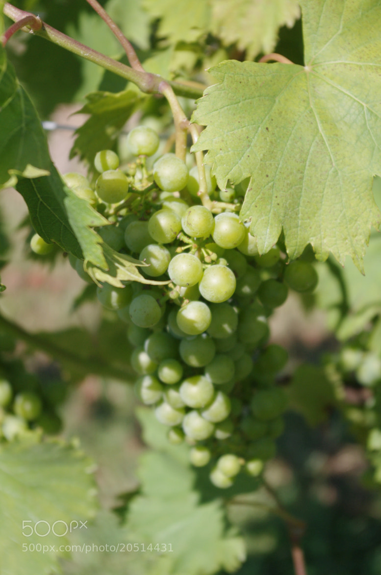 Photograph Green Grapes by Susan Southard on 500px