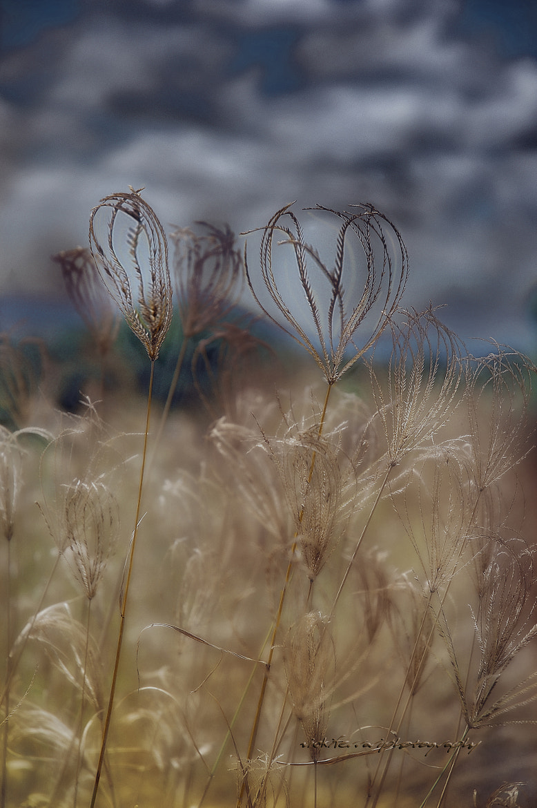 Photograph Grass Hearts © Vicki Ferrari Photography by Vicki Ferrari on 500px