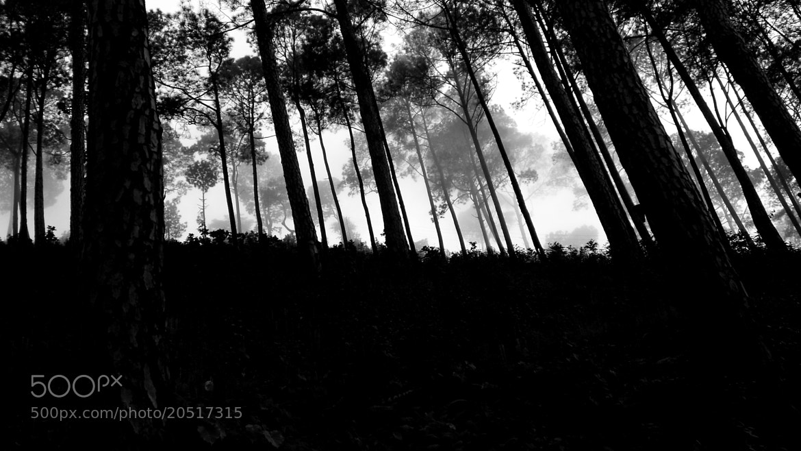 Photograph The Forbidden Forest  by Kashish Arora on 500px