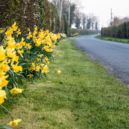 Daffodil Road, Canon EOS 760D, Canon EF-S 18-55mm f/3.5-5.6 IS STM