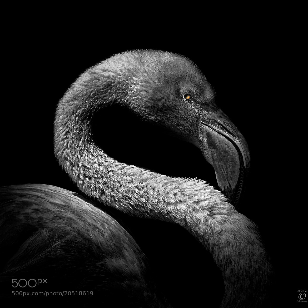 Photograph The Eye of The Beholder (BW version) by Christian Meermann on 500px
