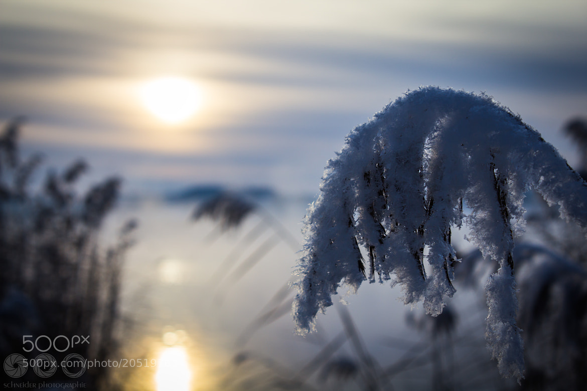 Photograph Freezy Reed by Christoph Schneider on 500px