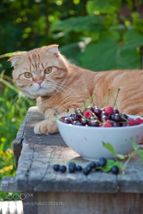 Photograph Cat and berries by letterberry on 500px