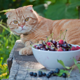 Cat and berries by letterberry ) on 500px.com