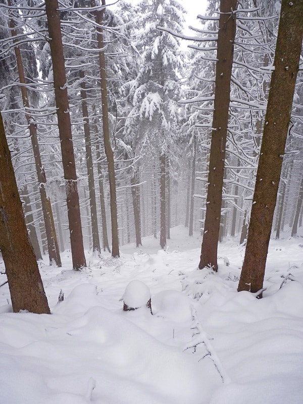 Photograph winter in the woods... by Johannes Ha on 500px