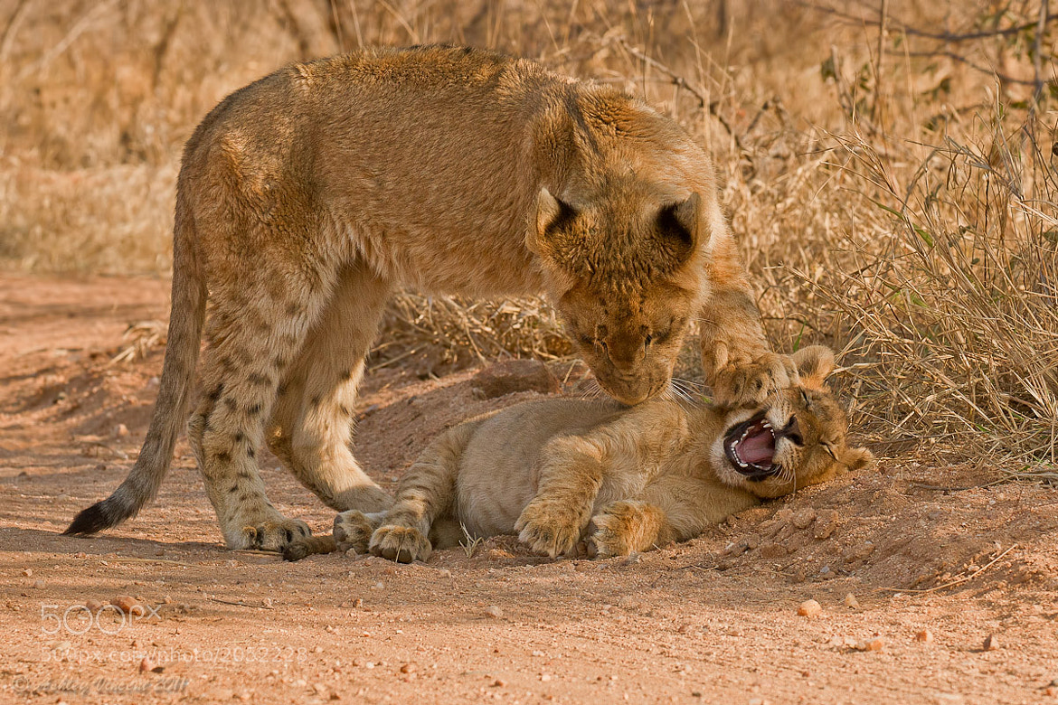 Photograph Please Stop, You're Killing Me!!! by Ashley Vincent on 500px