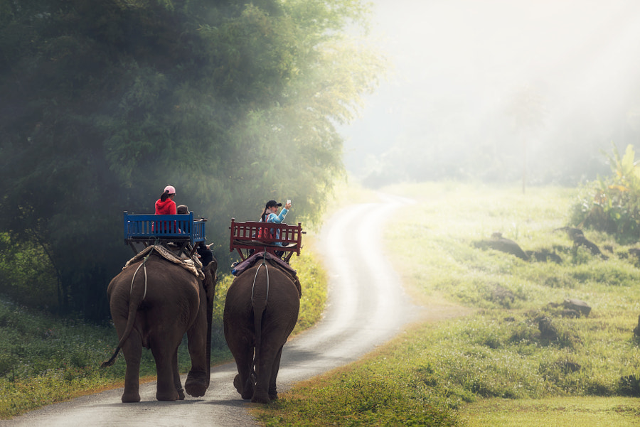 Elephant trekking through jungle in northern Laos by Sasin Tipchai on 500px.com