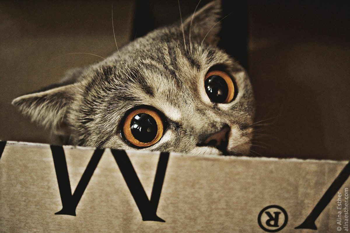 Photograph cat O_O by Alina Esther on 500px