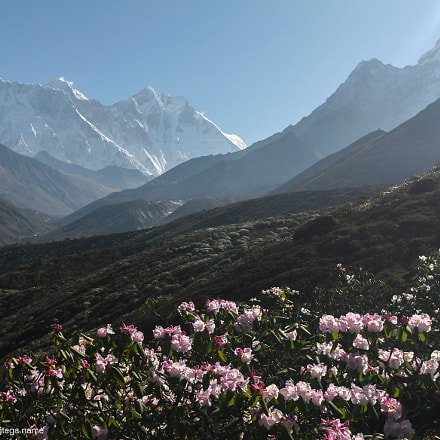Rhododendron view on Lhotse, Canon EOS 30D, Canon EF 17-40mm f/4L