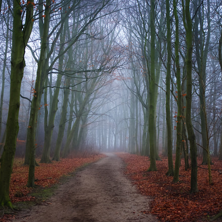 Foggy Tree Path, Sony ILCE-7M2, Sony FE 24-70mm F4.0 ZA OSS