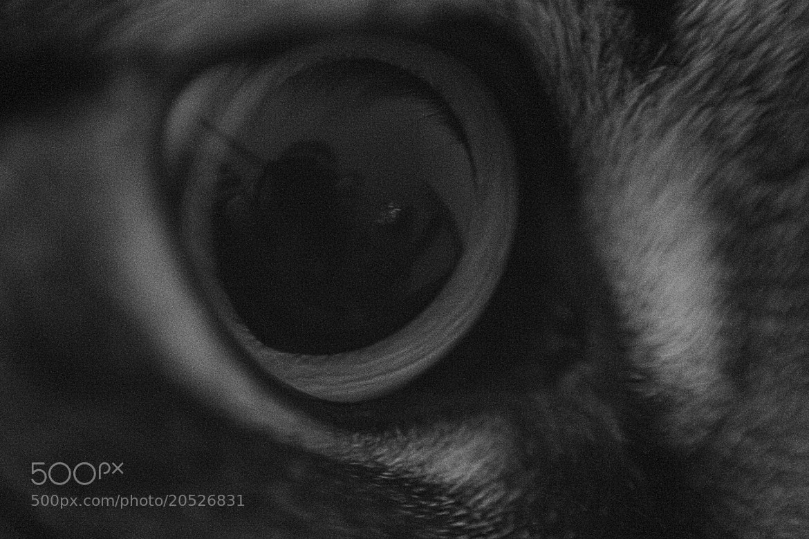 Photograph Eye of the Beast by Elise Copeland on 500px