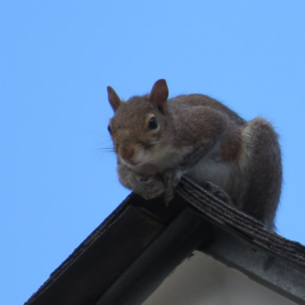 King of the World!, Canon POWERSHOT SX700 HS