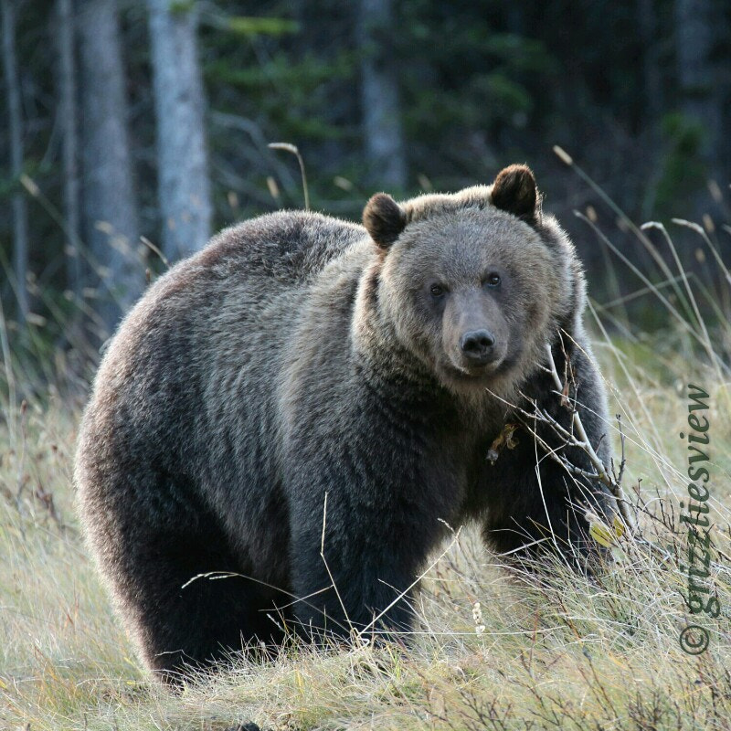 Photograph Up Close and Personal by Grizzlies View  on 500px