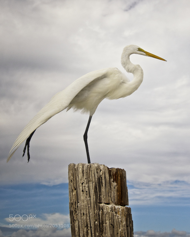 Photograph Yoga on the Beach by Vicki Jauron on 500px