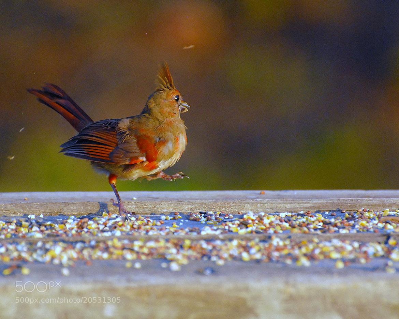 Photograph Danceing Queen by RICHARD KILDUFF on 500px