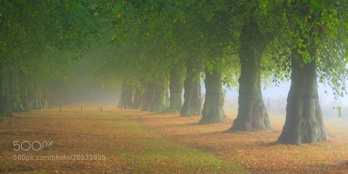 Photograph Lime Tree Avenue by Thắng Tô on 500px