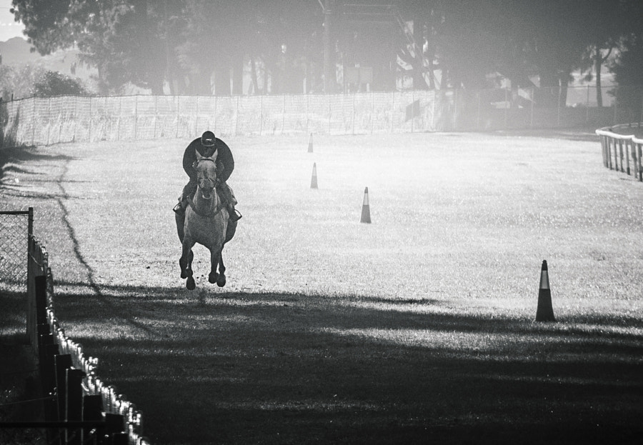 Morning Gallop #3 by Son of the Morning Light on 500px.com
