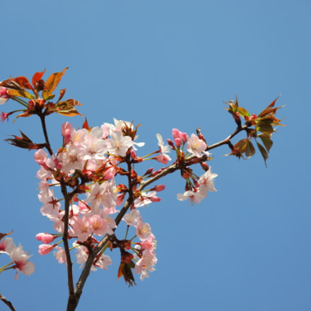 The Pink and Blue, Nikon COOLPIX P7800