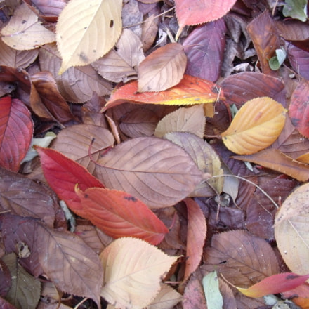 Fallen Leaves, Fujifilm FinePix J110W