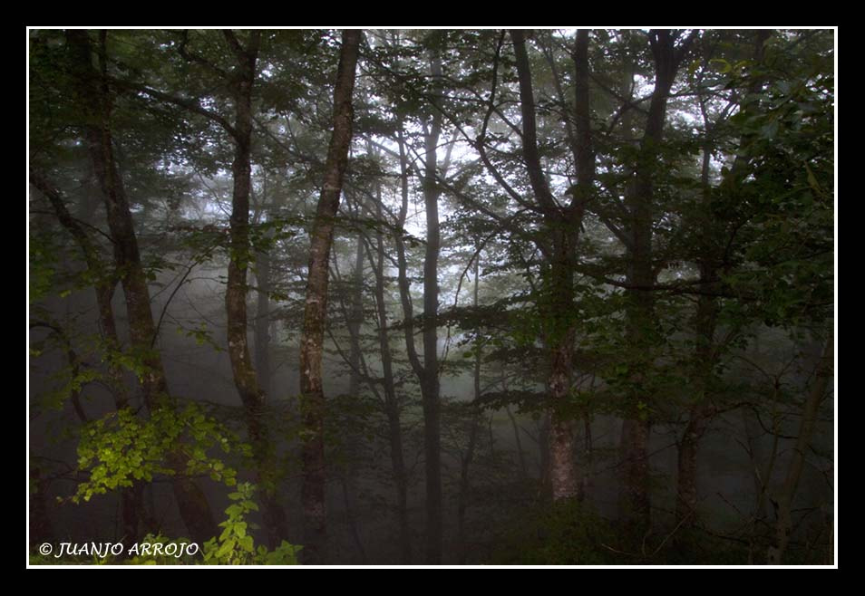 Photograph Niebla en el bosque-2 by Juanjo Arrojo on 500px