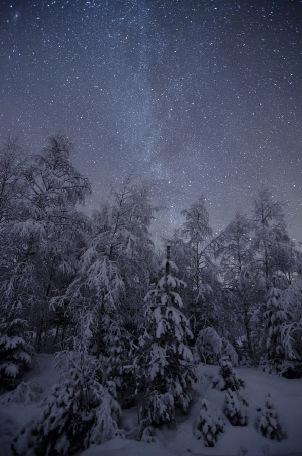 A very cold night in the forrest.