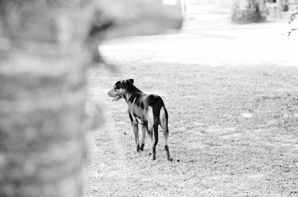 Photograph Dog by Bruno Dias on 500px