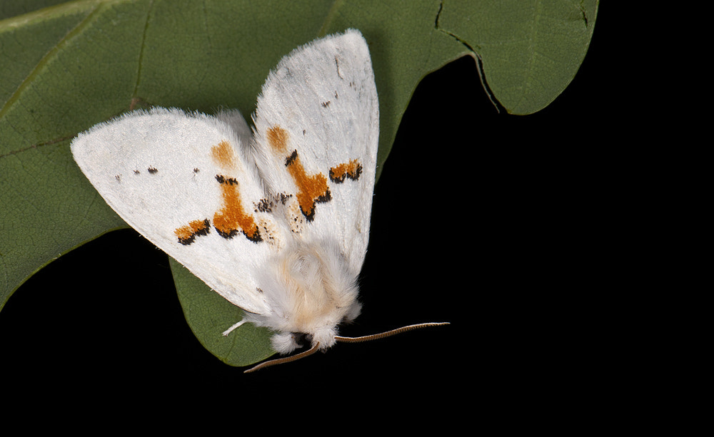 Photograph White Prominent by Janis von Heyking on 500px