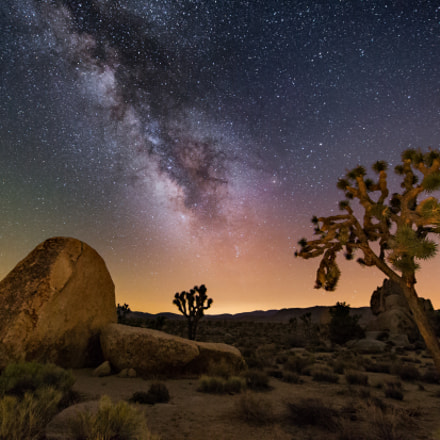 Joshua Tree at Night, Canon EOS-1D X, Canon EF 28-80mm f/3.5-5.6