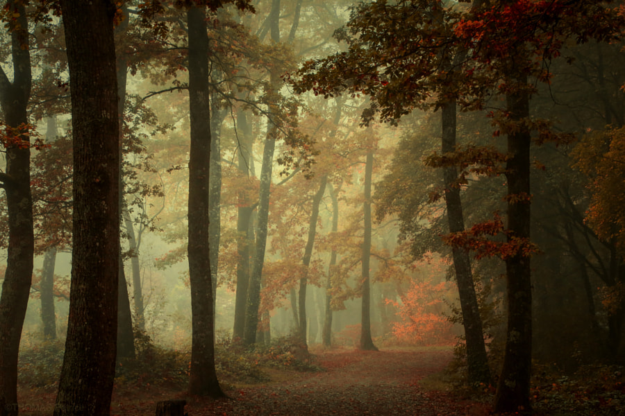 foggy atmosphere! by Patrice Thomas