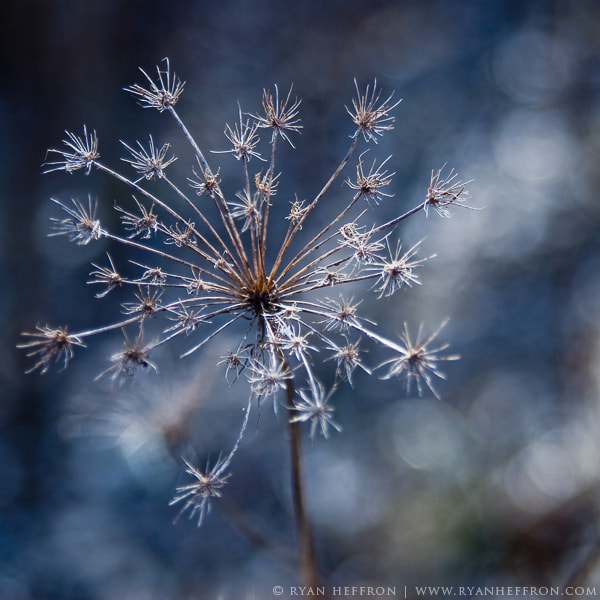 Photograph Winter Blues by Ryan Heffron on 500px