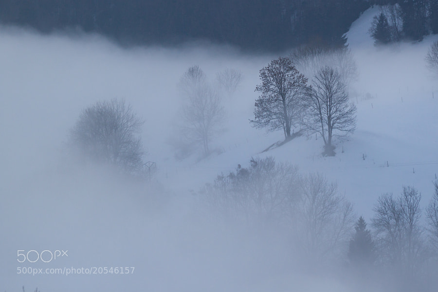 Photograph Winter Mist by Nicolas Gailland on 500px