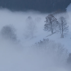Winter Mist by Nicolas Gailland (nicolasgailland)) on 500px.com