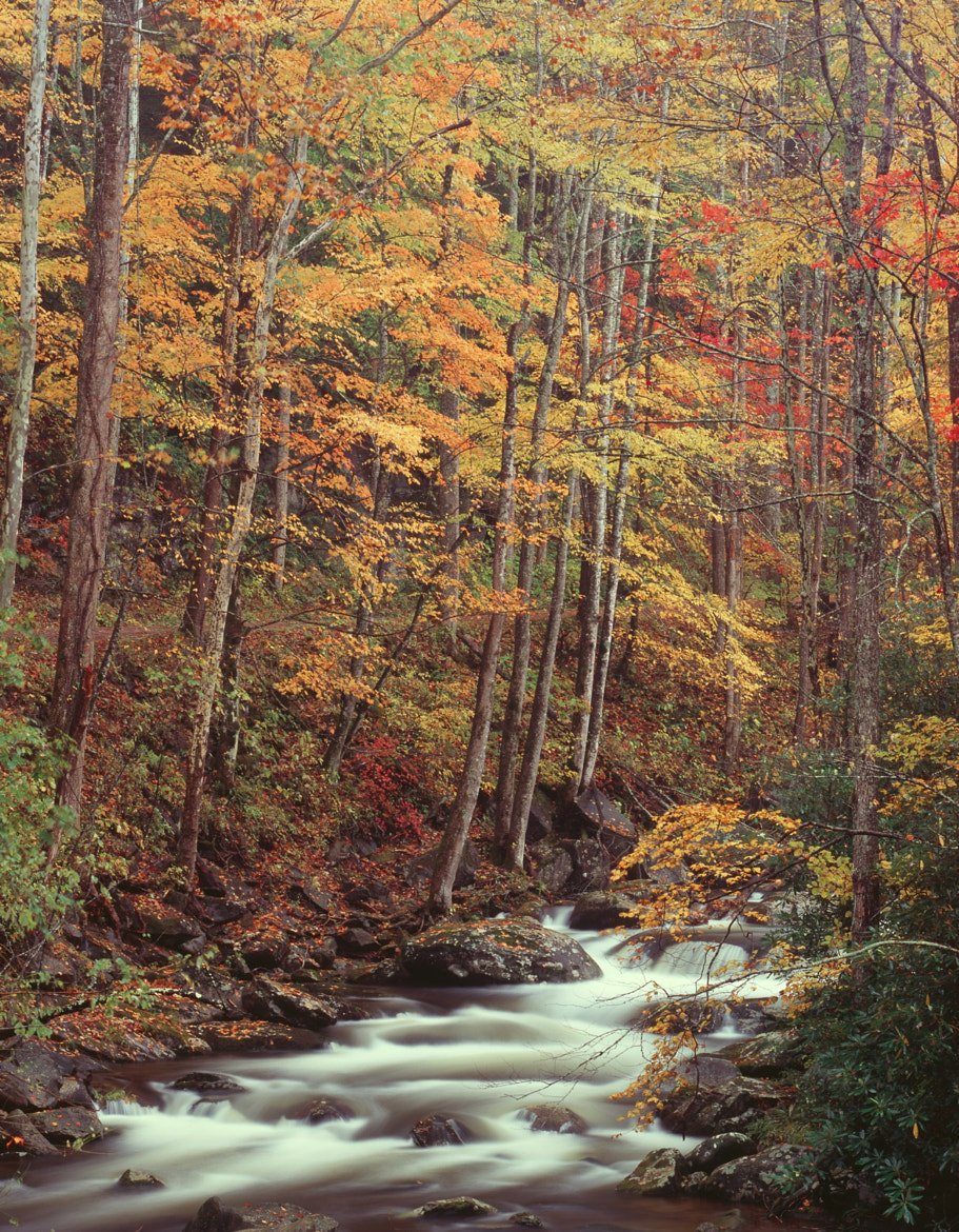 Photograph Big Creek in Autumn by Ben Prothro on 500px