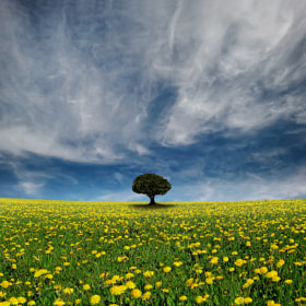 It's a Dandelion World by Carlos Gotay (gotay)) on 500px.com