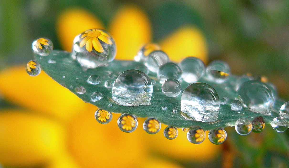 Photograph drop reflections by tugba kiper on 500px