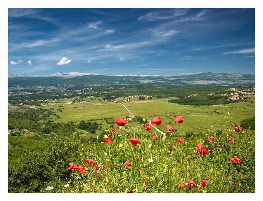 Photograph Poppies with A View by Marko Buntic on 500px