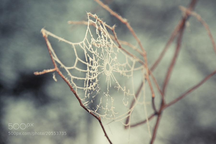 Wonder (Frozen Cobweb 01) by Maresa Smith on 500px.com