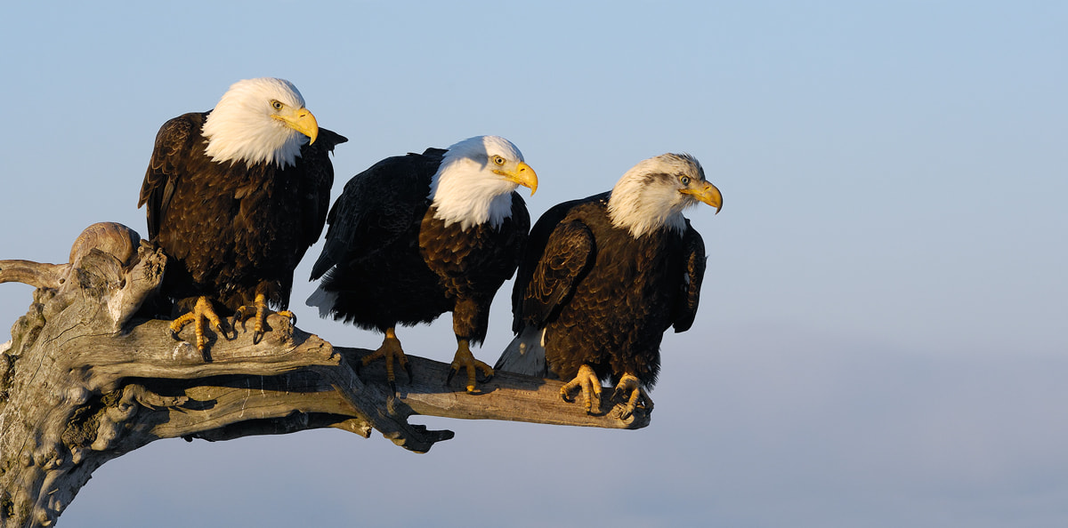 Photograph Illistrious Trio by Harry  Eggens on 500px