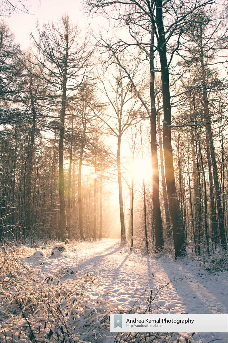 Photograph Winter magic by Andrea Kamal on 500px