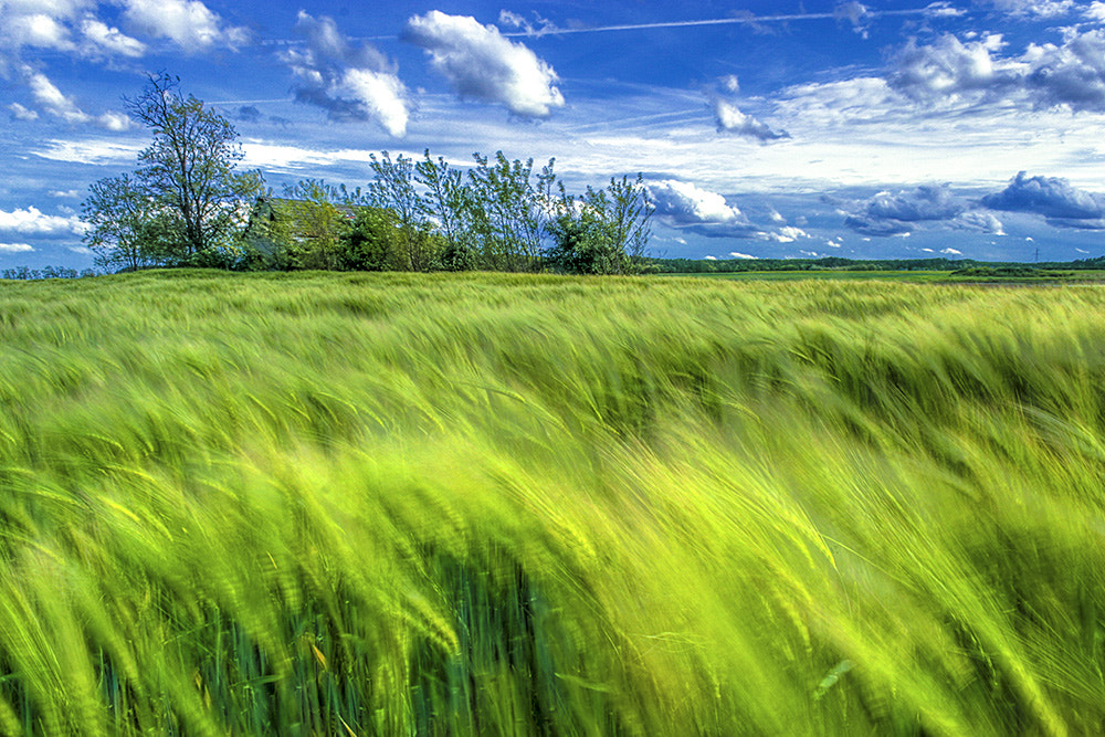 Photograph Wheat field by F Levente on 500px
