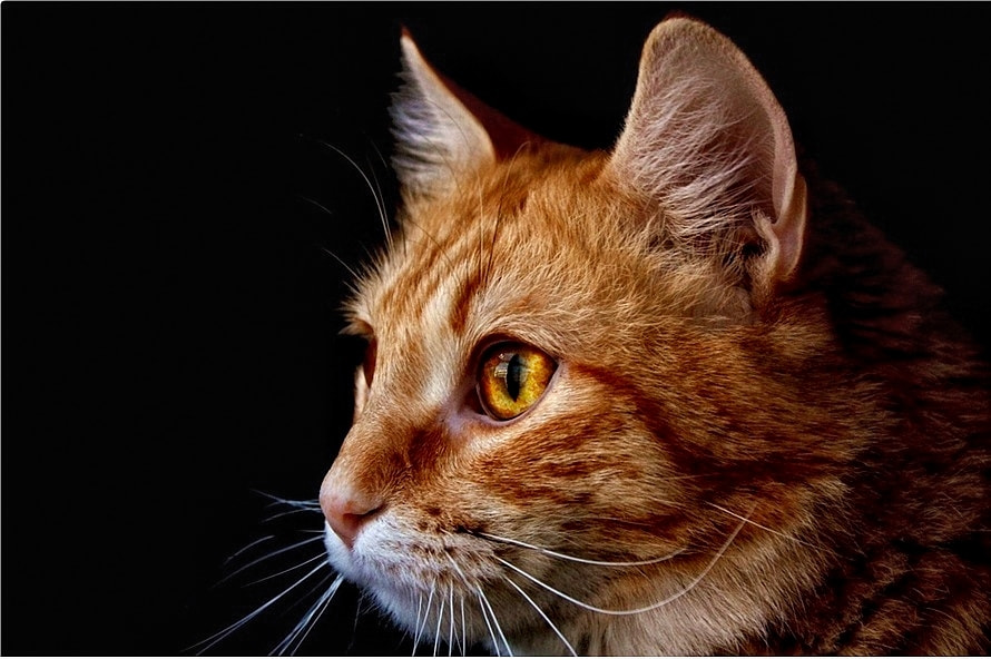 Photograph Gato by Sonia Martín on 500px
