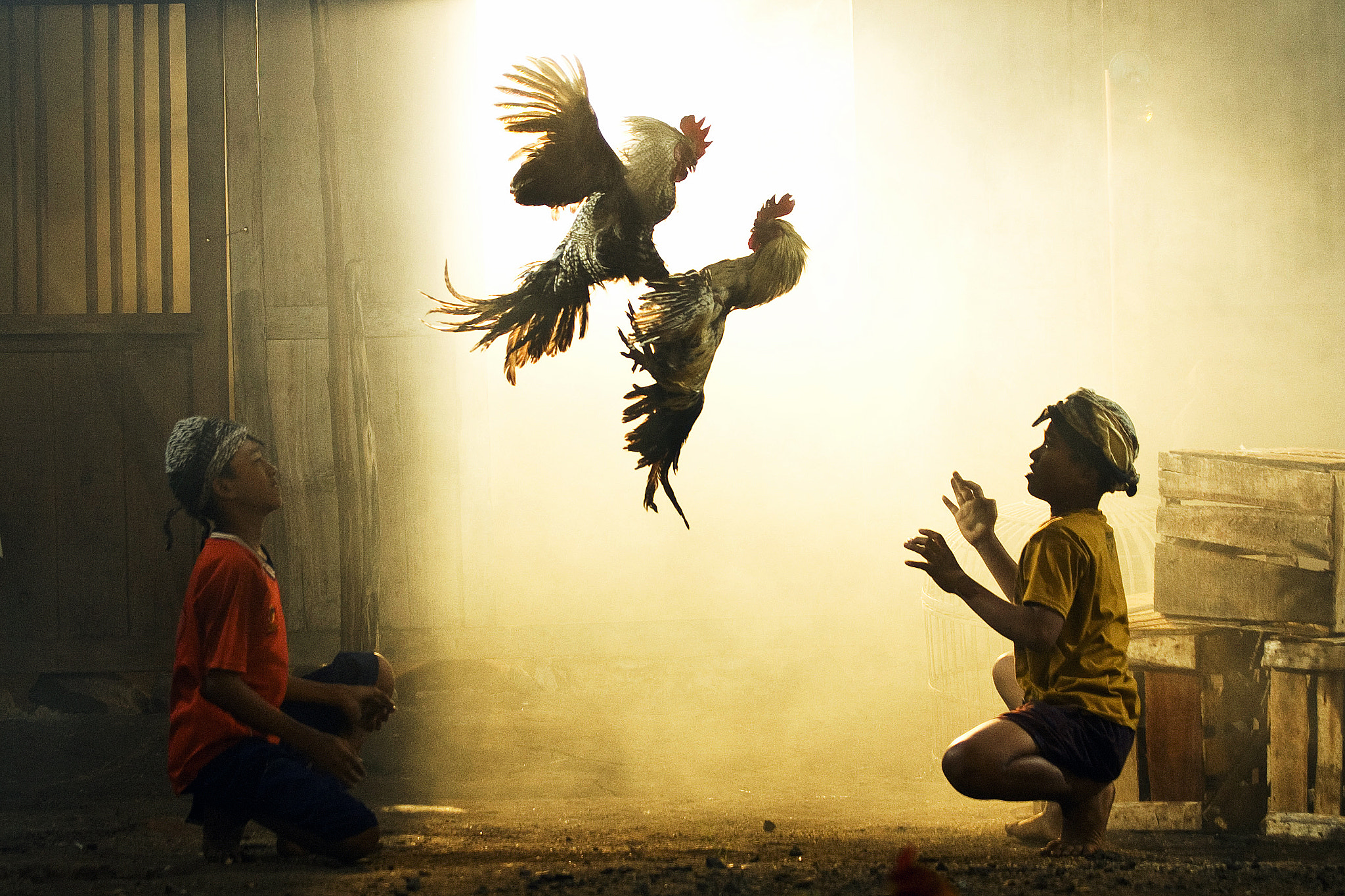 Photograph Rooster Fighting by Didik Harianto on 500px